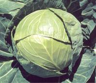 Семена капусты Балбро F1 2500 шт калибр. Hazera / Хазера