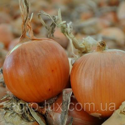 Семена лука Скапино F1 250 000 шт Hazera / Хазера