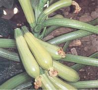 Семена кабачка Эзра F1 500 г Hazera / Хазера
