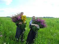 Монастырский травяной сбор для похудения