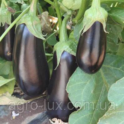 Семена баклажана Мадалена F1 1000 шт Hazera / Хазера