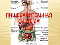 Препараты Арго для желудка, кишечника, печени, поджелудочной, антипаразитарные препараты, очистка
