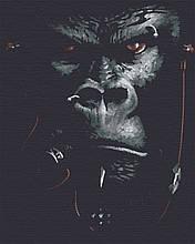 Картина по номерам тварини мавпа 40х50 Бос