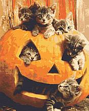 Картина по номерах тварини коти 40х50 Гарбузові котики
