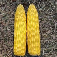 Лискам HMX 5000 сем. кукуруза Clause