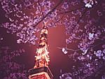 ГРУППОВОЙ ТУР в Японию: «Легенды и огни Токио - летний сезон» на 8 дней/7 ночей, фото 5