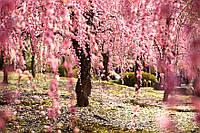 ГРУППОВОЙ ТУР в Японию: «Легенды и огни Токио - летний сезон» на 8 дней/7 ночей