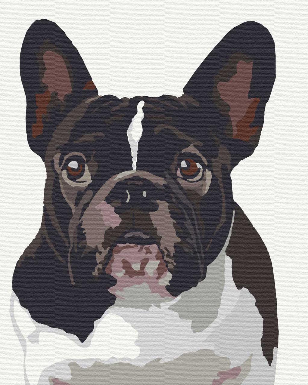 Картина за номерами тварини собаки 40х50 Уінстон
