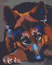 Картини за номерами тварини собаки 40х50 Шепард