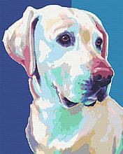 Картина за номерами лабрадор собака тварини 40х50 Скай