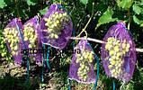 Сетка для винограда от ос, пчел и др. 50шт. на 2кг, фото 6