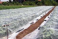 Як використовувати біле агроволокно в домашньому господарстві