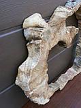 Слэб клён, фото 3