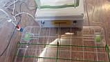 Інкубатор для яєць Курочка Ряба 56, в пластиковому корпусі, вентилятор, 4 лампи, фото 4