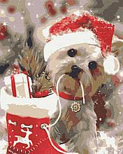 Картина за номерами тварини собаки 40х50 Вітання