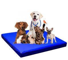 Ветеринарные изделия