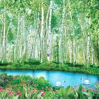 Фотошпалери, Березовий рай, 16 аркушів, 196х280 см