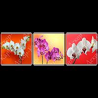 Триптих на полотні, картина, 30см*30см*3шт, квіти, орхідеї
