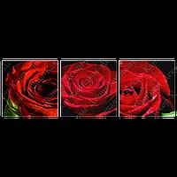 Триптих на полотні, картина, 30см*30см*3шт, червона троянда квіти