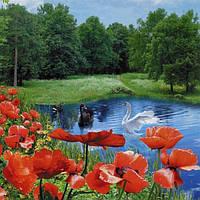 Фотошпалери, квіти, лебеді,ставок, Літній блюз , 15 аркушів, розмір 201х242см