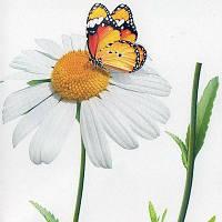 Наклейка, ромашка, цветы, бабочка, декупаж, интерьерная Декор № 6