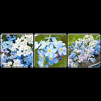 Триптих на полотні, картина, 30см*30см*3шт, квіти, незабудки