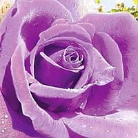 Фотошпалери, квіти, Ультрафіолет, 4 листа, 140х97 см
