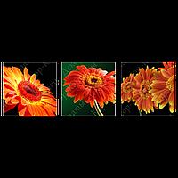 Триптих на полотні, картина, 30см*30см*3шт, квіти, гербера