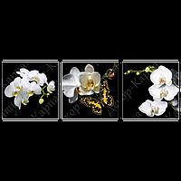 Триптих на полотні, картина, 30см*30см*3 шт, метелик метелик орхідея
