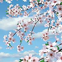 Фотошпалери,квіти, дерево, Квітуча сакура, 6 аркушів, 140х145 см
