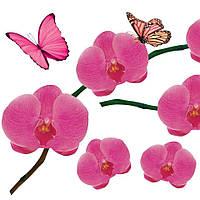 Наклейка, орхидея розовая, бабочки, интерьерная Label №12