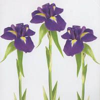 Наклейка, ирис, цветы, интерьерная Декор №9