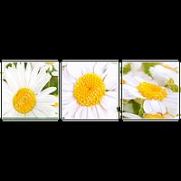 Триптих на полотні, картина, 30см*30см*3шт, квіти, ромашка