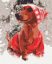 Картини за номерами тварини собаки зимові 40х50 Підсніжник