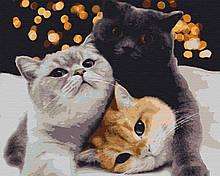 Картина по номерам животные кошки 40х50 Вечеринка