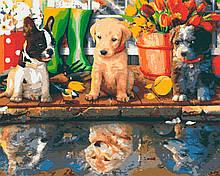 Картины по номерам животные собаки 40х50 Будущие Вожаки