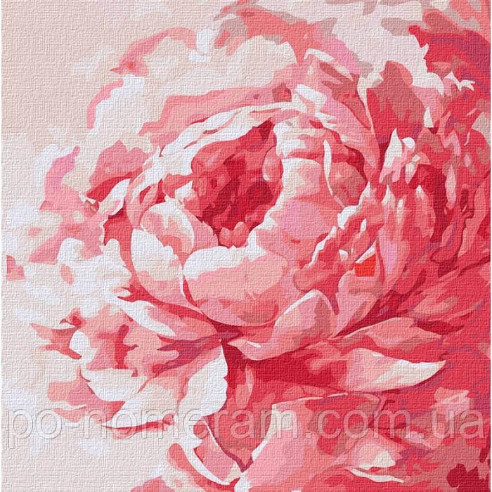 Картина по номерам Идейка Розовый пион (KHO2943) 40 х 40 см (Без коробки)