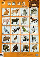 Плакат на тему Животные на корейском, китайском, английском языках