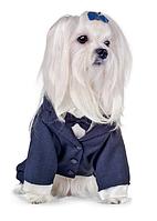"""Костюм - тройка для собак  """"Джованни"""", размеры XS, S для щенков и собак мелких пород"""