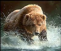 Алмазна мозаїка, вишивка 40x50 ведмідь