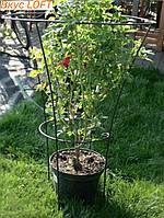 Садовая кольцевая опора 55х100см. Кольцевая опора для растений. Опора для цветов металлическая.Кольцевая опора