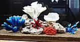 Композиція К58 для акваріума з коралами (від 140л), фото 2