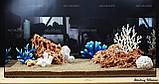 Композиция из Spaghetti и кораллов K62 (от 160л), фото 3