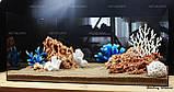 Композиция из Spaghetti и кораллов K62 (от 160л), фото 5