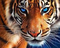 """Алмазная вышивка """"Тигровый взгляд"""""""