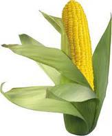Семена кукурузы AS 33049, простой гибрид (ФАО 260)