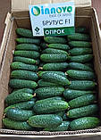 Семена огурца Брутус F1 (250 сем.) Innova Seeds, фото 4