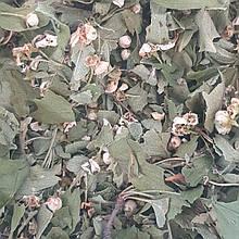 Глід (квіти) 50 гр (Свіжий урожай)