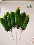 Семена огурца гибрида корнишона Надежда F1 1000 семян темно-зеленый  ГолландияГолландия, фото 2