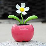 Сонячний квітка Flip Flap, фото 2